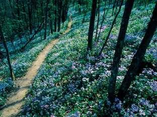 Raven Run Wildflowers
