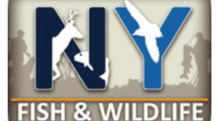 NY Wildlife and Fishing App