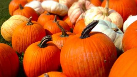 Pumpkinville - Pumpkinville - Cattaraugus County EDPT