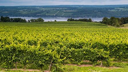 Lakewood Vineyard on Seneca Lake