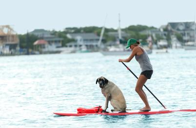Wrightsville Beach Paddleboarding Dog