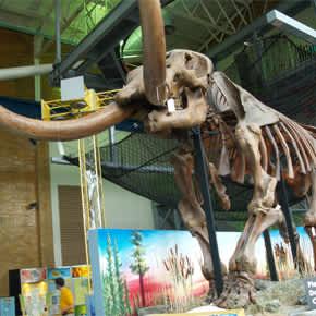 Mastodon Bones at Science Central
