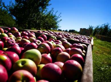 Where to Pick, Sip & Taste Apples in Albany