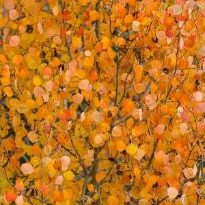 Salt Lake's Fall Foliage Preview