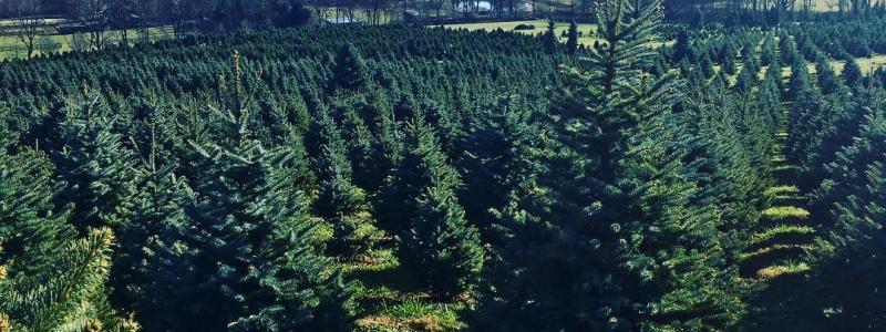 create holiday memories at loudoun christmas tree farms