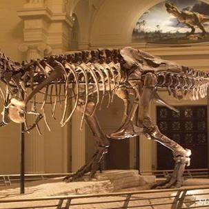 Sue the T-Rex at The Field Museum