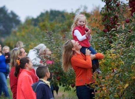 Apple Picking at Uncle John's Cider Mill
