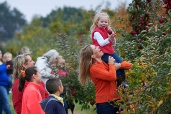 Apple Picking at Uncle John's
