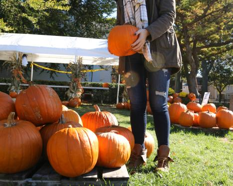 Fall Festivals & Fairs
