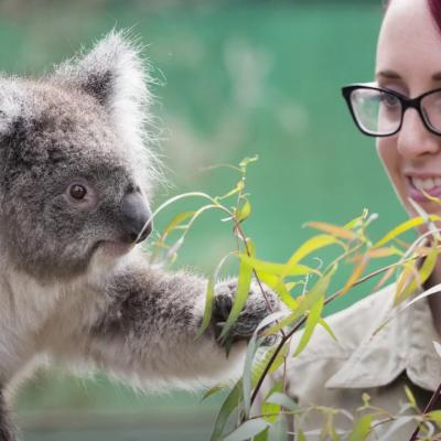 Videos - Discover Melbourne's Wildlife