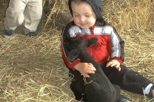 boy with alpaca