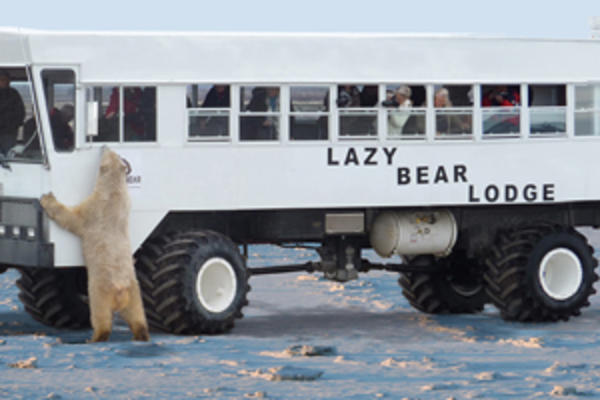 Ultimate Polar Bear Tour
