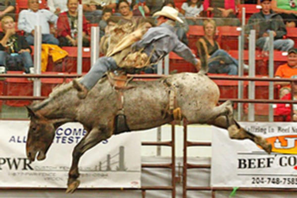 Rodeo riding in Western Manitoba