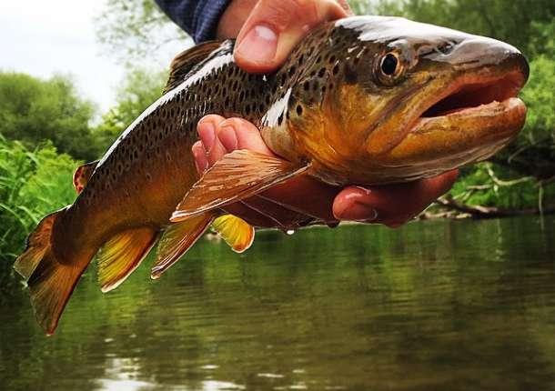 Fishing 411