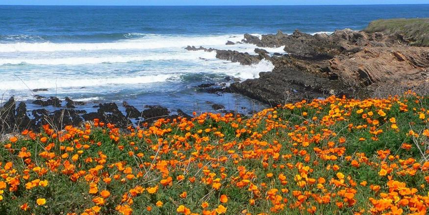 Tips & Tricks to Help you Plan Your Vacation to SLO CAL
