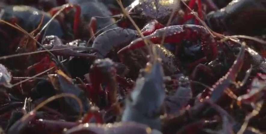 It's Crawfish Season Y'all