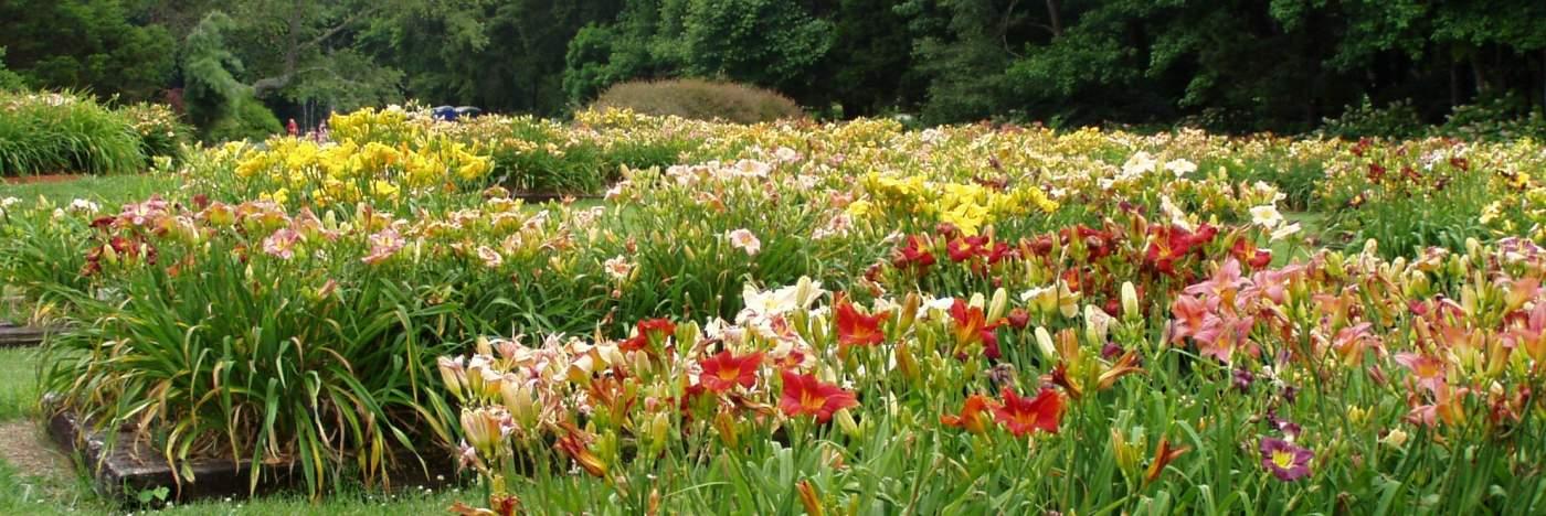 Huntsville Blooms