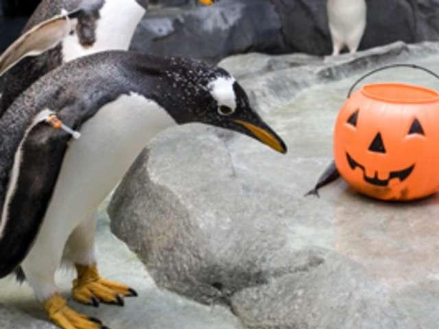 Penguin with Halloween bucket