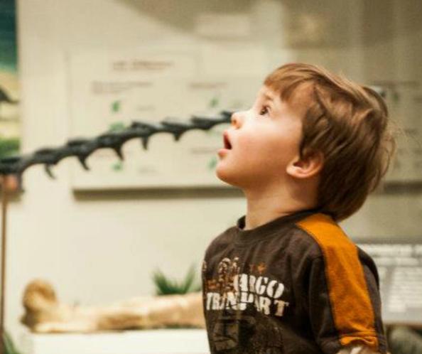 Museum of Natural History at UWSP