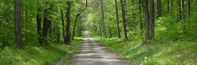 Brookfield State Reforestation Area