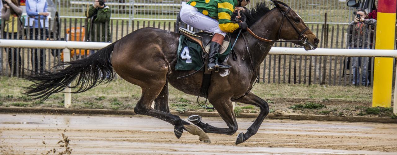 Jockey at Aiken Steeplechase