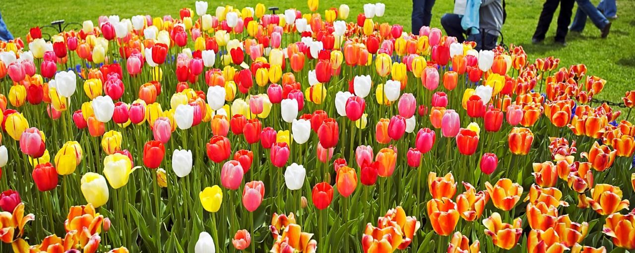 Spring flower shows and festivals in new york state mightylinksfo