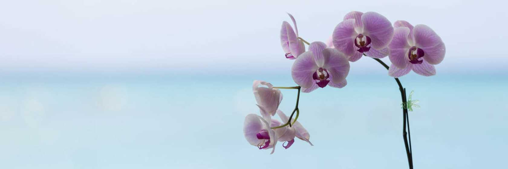Press Kit - Orchid