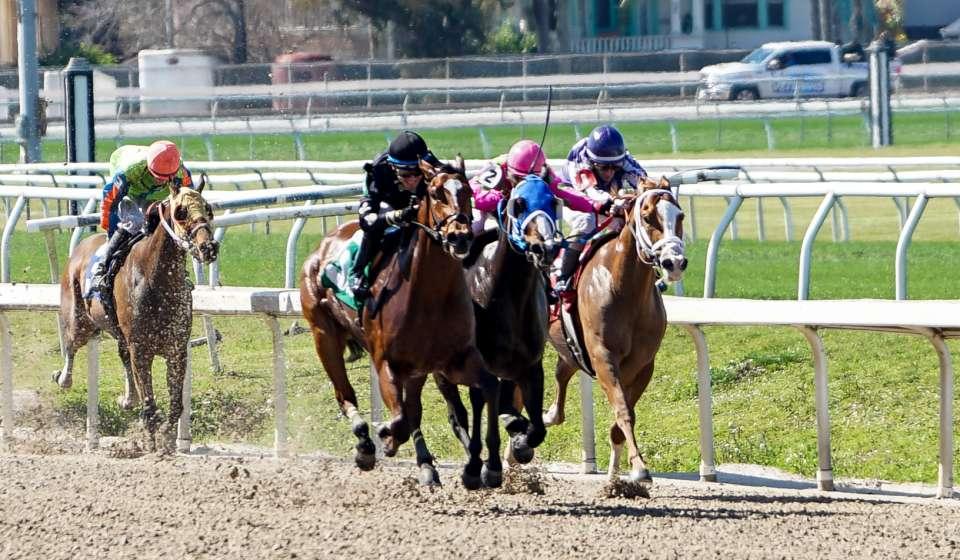 Horse Racing - Fairgrounds