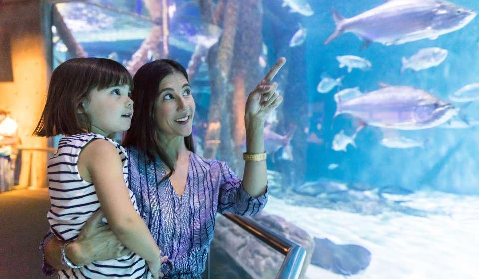 The Audubon Aquarium of the Americas