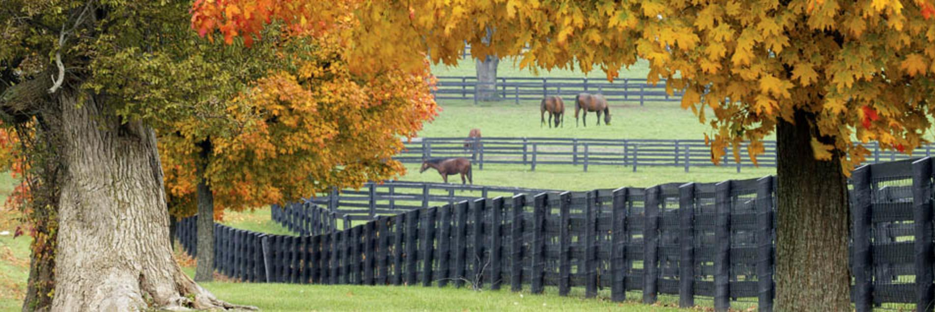 Fall Horse Farm