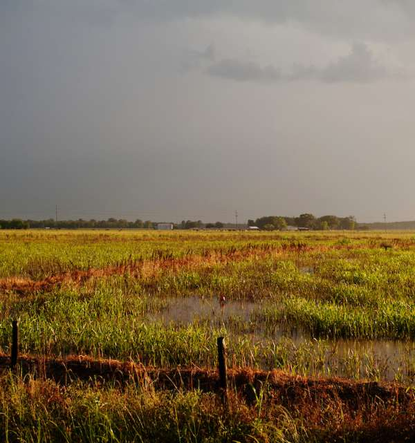 Crawfish Field