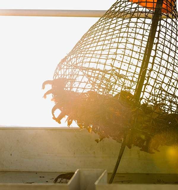 Crawfish Net