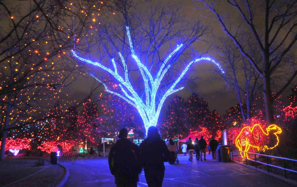 Denver Zoo Zoo Lights Design Ideas