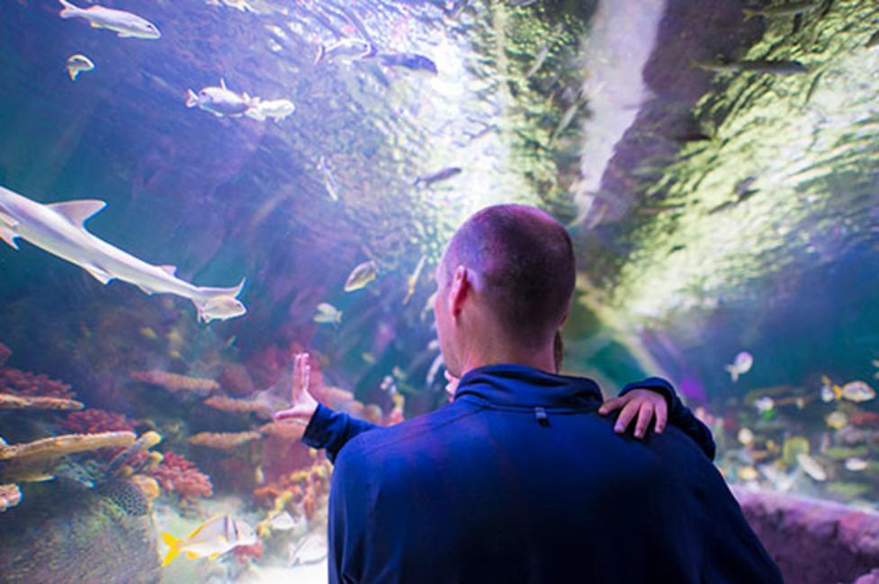 Via Aquarium - Photo courtesy of Via Aquarium