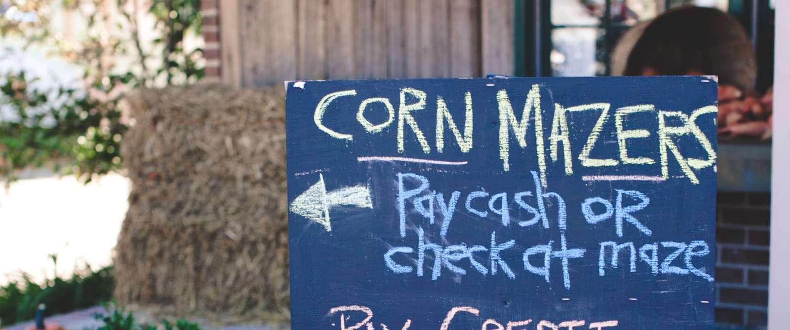 Copy of corn maze 2