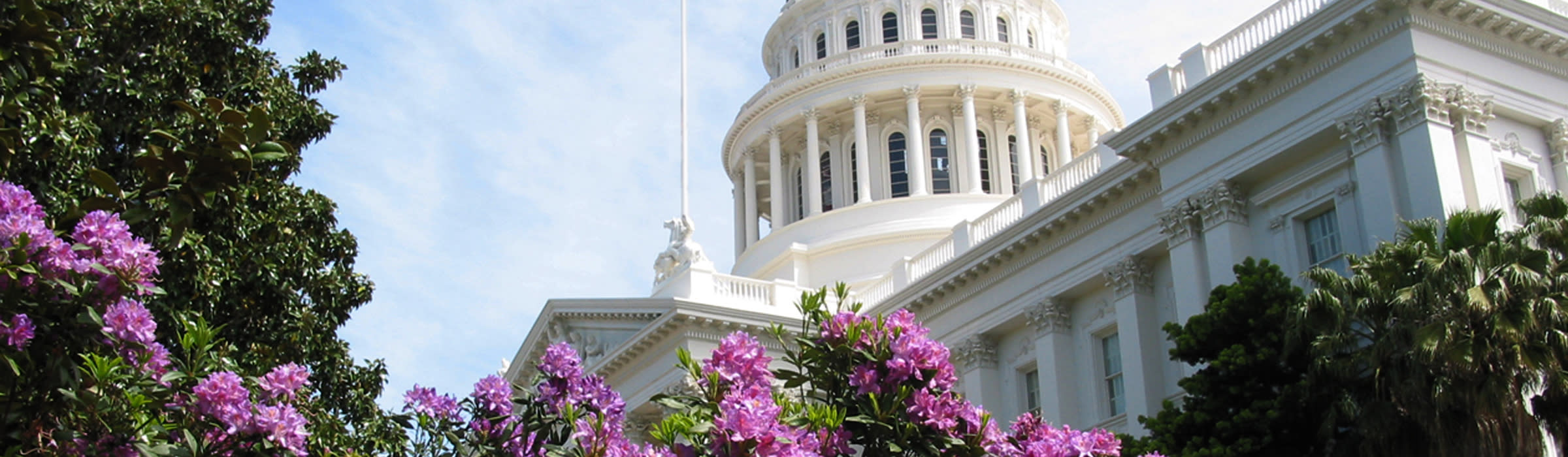 Capitol With Flowers