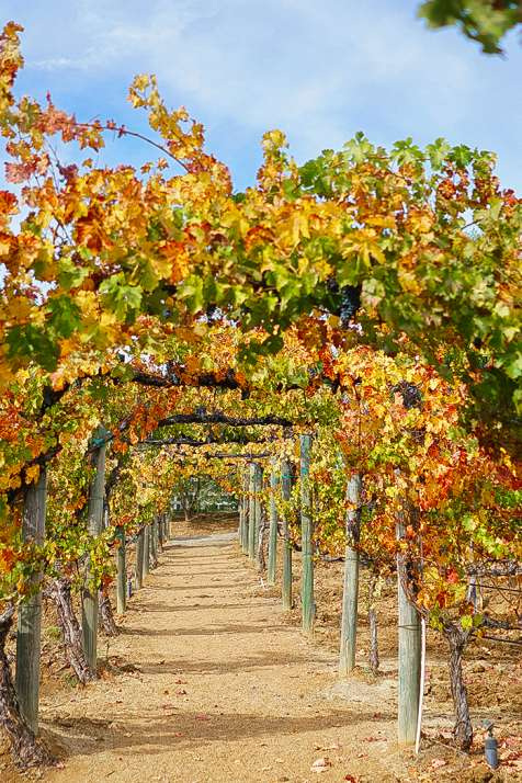 Fall in Temecula, CA