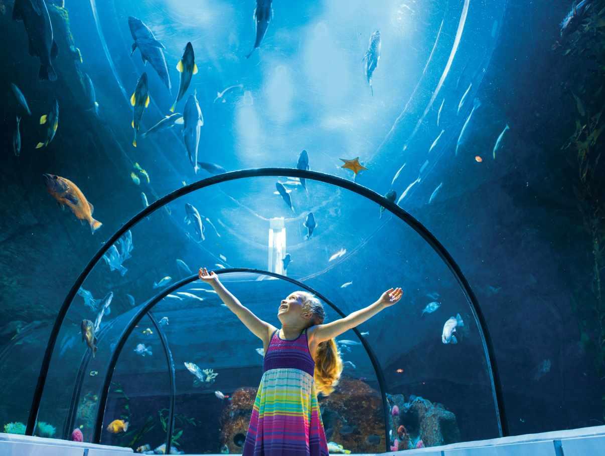 Aquarium du qu bec tourist sites quebec city and area for Site aquarium