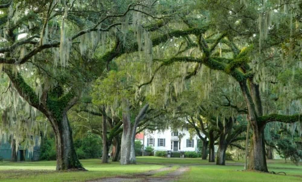 mcleod plantation historic site charleston area cvb