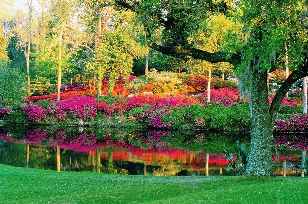Charleston Sc Area Plantation Tours