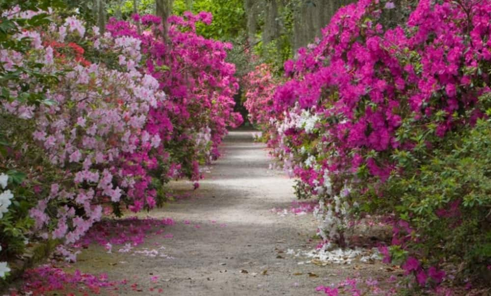 Magnolia Plantation Tours From Charleston