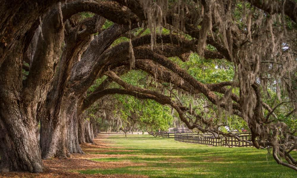 Boone Hall Plantation Charleston Area Cvb