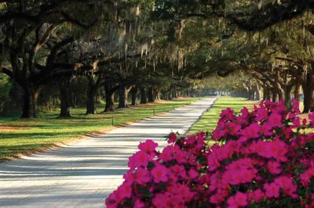 Charleston Plantation Tour Packages