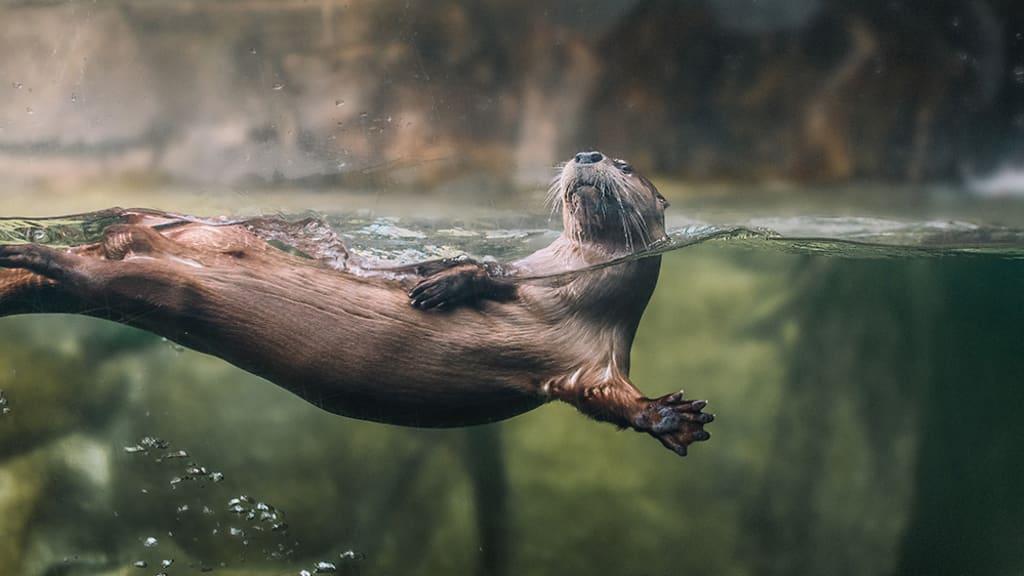Image of South Carolina Aquarium