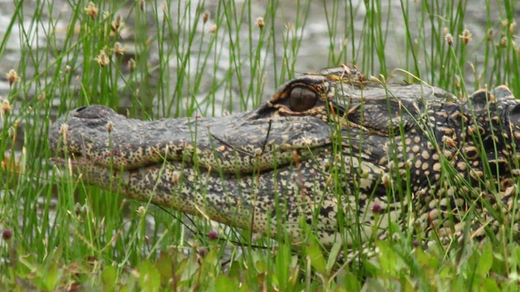 Image of Kiawah Island Golf Resort - Nature Tours