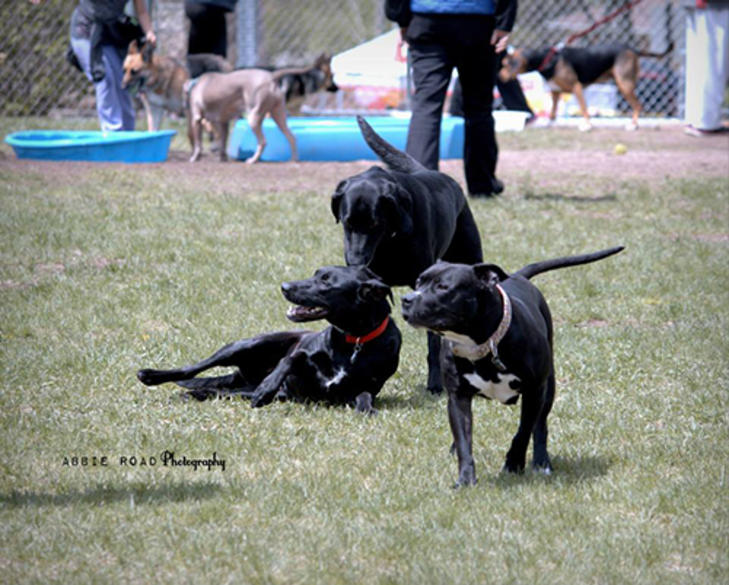 Dogs at Covell Dog Park