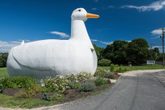 Big Duck, The