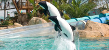 Dolphins_Airborne_1395x2100_300_RGB.jpg