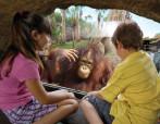 Orangutan and Kids