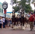 Budweiser Clydesdales visit Old Town | 2016